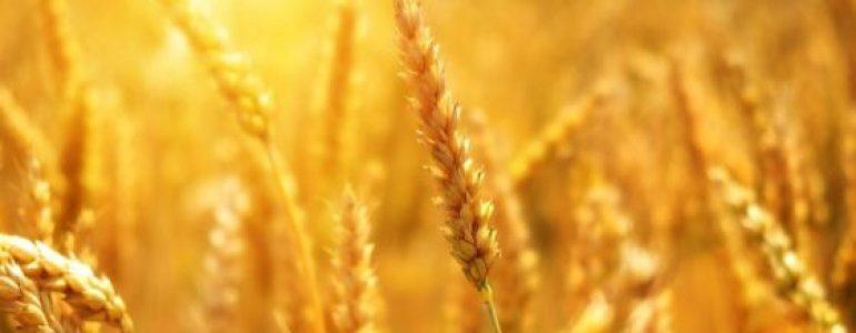 Agriculture Blog